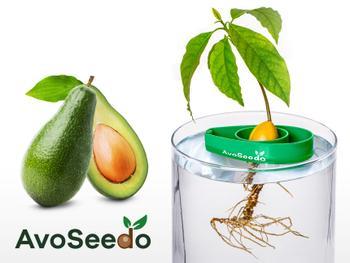 AvoSeedo - dyrk avokado