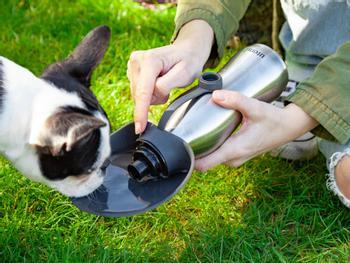 Utenu vannflaske til hund