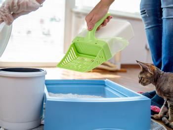 Scoop Up! Kattesandspade med beholder